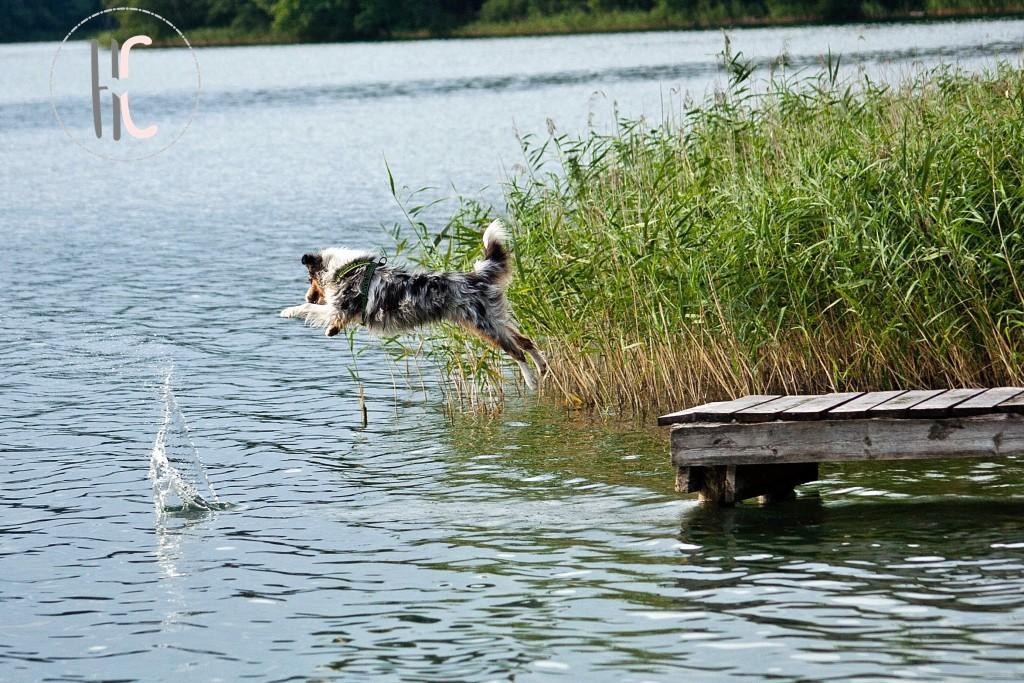 Chuckit Amphibious Duck Diver