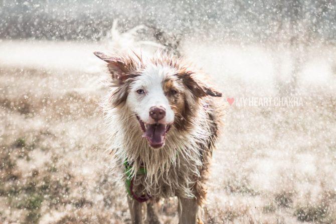 Jak poprawić relację z psem