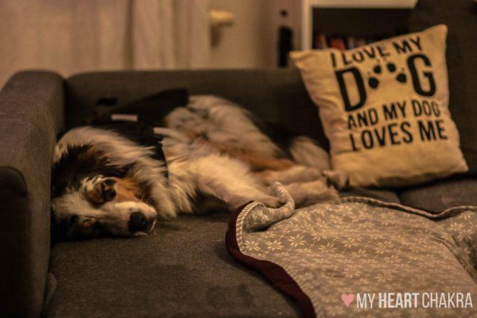 jak nauczyć psa odpoczywać