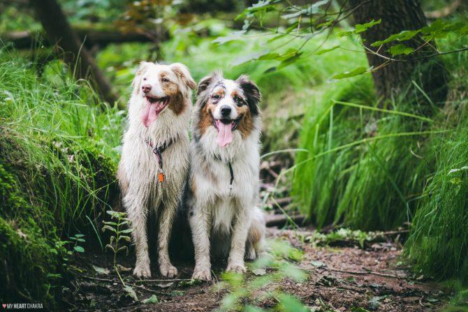 pies ze smyczy lesie