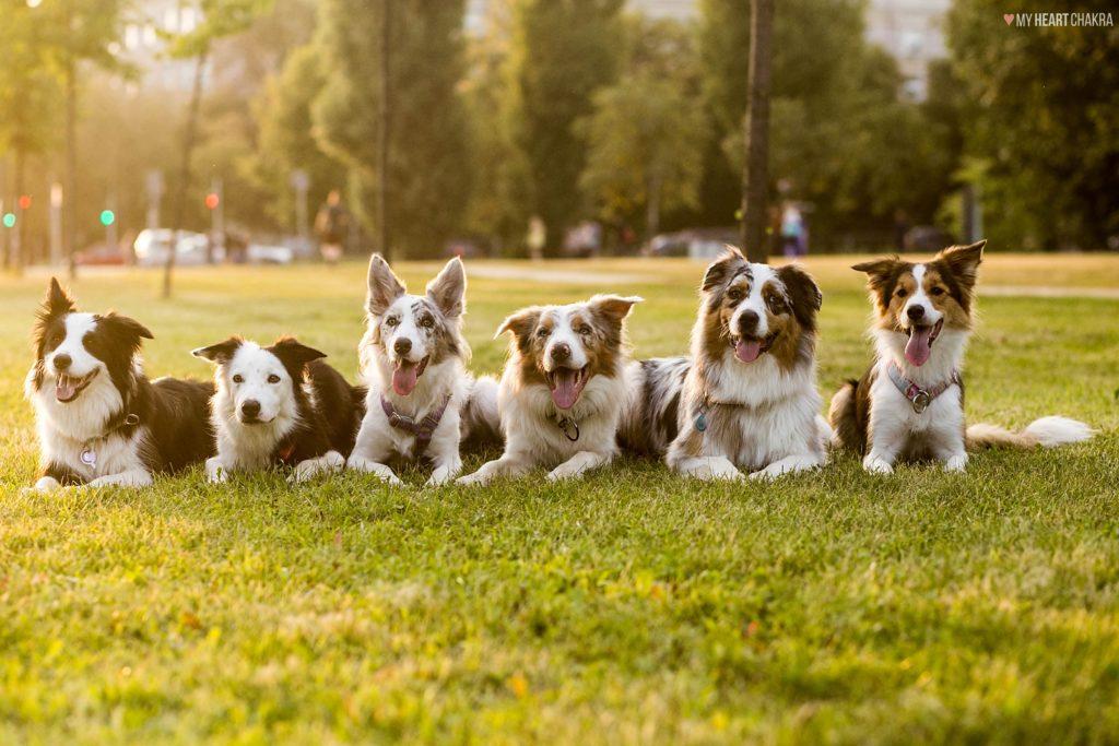 zawody Latające Psy