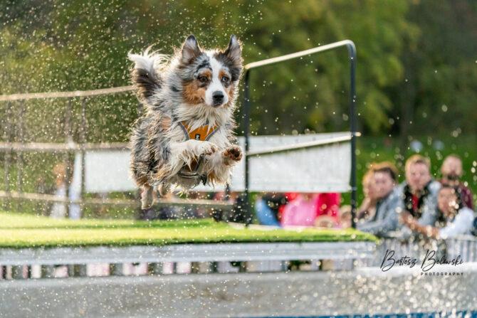Dog Diving, Poznań 2020, fot. Bartosz Bolewski